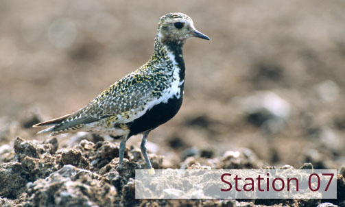 Station 07: Animals in the raised Bog