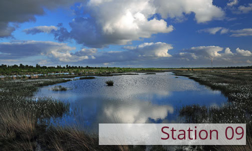 Station 09: How peat bogs grow